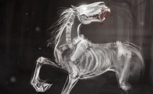 scary_horse_photo_8072