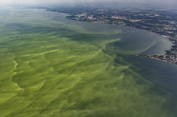 Lake-Erie-algal-bloom-Aerial-Associates-Photography