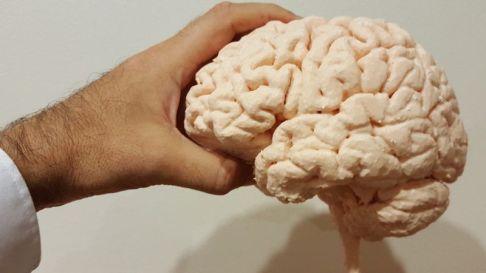 hand and brain