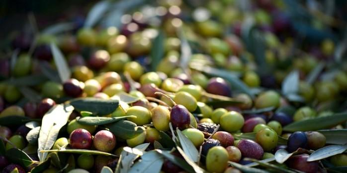 olives-253264_640-698x349