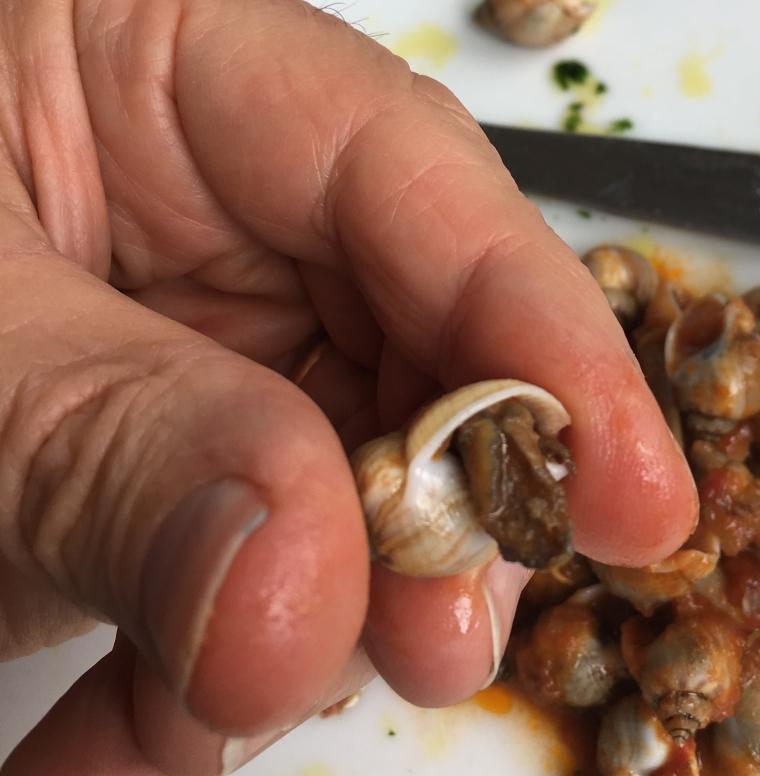 snail-scale.jpg